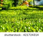 green grass texture for nature...   Shutterstock . vector #421724314