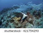 dead green turtle entangled in... | Shutterstock . vector #421754293