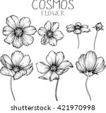 Cosmos Flowers  Drawings Vector