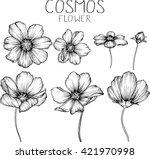 Cosmos Flowers Flowers ...
