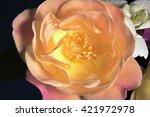 Small photo of Delicate Pink & Yellow 'Joseph's Coat' Rose Macro
