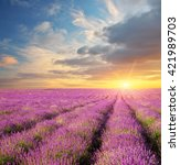 lavender beautiful meadow.... | Shutterstock . vector #421989703