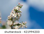 spring flowers background.... | Shutterstock . vector #421994203