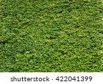 ivy green house wall | Shutterstock . vector #422041399
