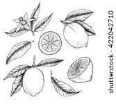 hand drawn illustration  ... | Shutterstock . vector #422042710