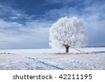 Single Tree In Frost And...