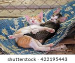 cats hug   Shutterstock . vector #422195443