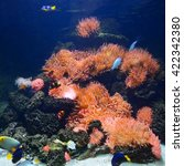 Small photo of Exotic marine aquarium coral reef environment with pink actinia and tropical fish