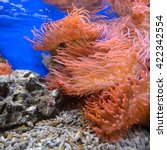 Small photo of Exotic marine aquarium environment with pink actinia