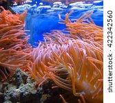 Small photo of Exotic marine aquarium environment with pink actinia