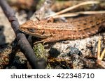 macro shot of a lizard. early... | Shutterstock . vector #422348710