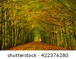 Tree Tunnel Consisting Of Beec...