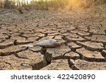 Dead Fish On Cracked Earth At...