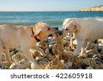 Dog  Sea  Ocean  Labrador ...
