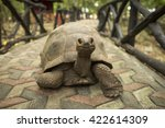 Stock photo an aldabra giant tortoise looks out from its shell on prison island off zanzibar tanzania 422614309