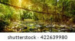 beautiful rain forest and... | Shutterstock . vector #422639980