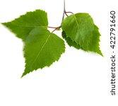 birch leaves on a white... | Shutterstock . vector #422791660