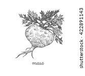 maca root. vector plant... | Shutterstock .eps vector #422891143