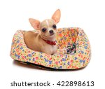 chihuahua puppy in the basket | Shutterstock . vector #422898613