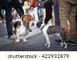 Stock photo two cute urban dogs basset hound and french bulldog getting to know and greeting each other by 422932879