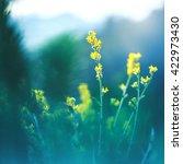 Meadow Beautiful Yellow Flower...