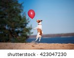 Dog Jack Russell Terrier Jumps...