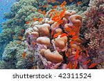 scalefin fish on the reef | Shutterstock . vector #42311524