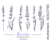 vector lavender hand drawn... | Shutterstock .eps vector #423127783