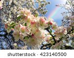 flowering shrub decorative... | Shutterstock . vector #423140500