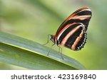Macro Of Milkweed Butterfly ...