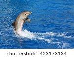 Dolphin Exhibition In Aquarium