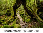 a forest walkway that goes... | Shutterstock . vector #423304240
