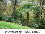 park alley in the botanical... | Shutterstock . vector #423315838