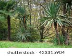 park alley in the botanical... | Shutterstock . vector #423315904