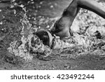 swimming fast   high speed... | Shutterstock . vector #423492244