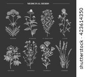 vector hand drawn collection of ... | Shutterstock .eps vector #423614350