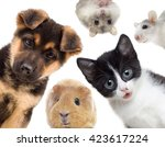 puppy and kitten and guinea pig  | Shutterstock . vector #423617224