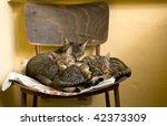 Stock photo sleeping cats 42373309
