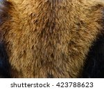 Close View Of Red Panda Fur Or...