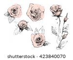 Rose Set. Realistic Pencil...