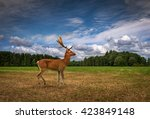 deer in a field | Shutterstock . vector #423849148