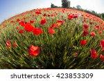 field of poppies in the grain... | Shutterstock . vector #423853309