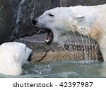 Roaring polar bear - stock photo