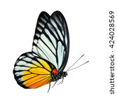 Stock photo beautiful flying yellow red spot butterfly the red spot sawthooth prioneris philonome clemanthe 424028569