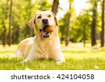 Dog With A Ball In Mouth