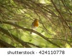 Robin Red Breast  Erithacus...