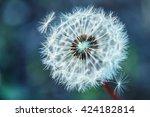 close up dandelion tranquil... | Shutterstock . vector #424182814
