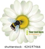 Furry Bumblebee And White Daisy ...