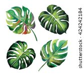tropical split leaves plant... | Shutterstock . vector #424242184