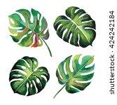 tropical split leaves plant... | Shutterstock . vector #424242184